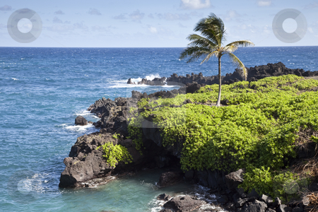 Rocky Shore stock photo, Wai'anapanapa State Park, Hana, Maui, Hawaiian Islands, United States by mdphot