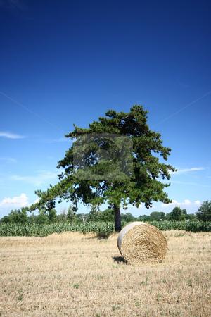 Hay bales  stock photo, Hay bales and Douglas pine by Istv??n Cs??k