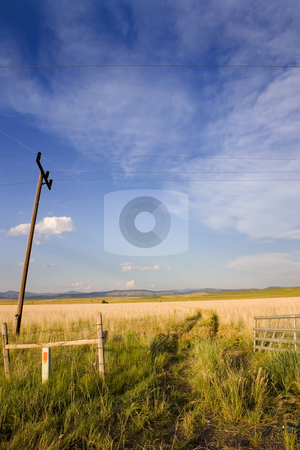 Open Gate to a Field in Helena stock photo, Gate to a Field with Electric Poles in Helena Montana by Mehmet Dilsiz