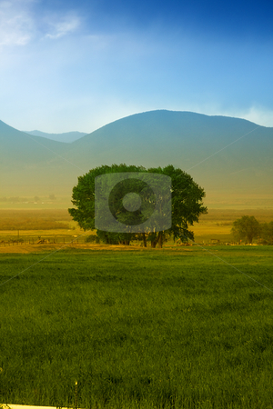 Tree in a farm stock photo, Tree in a farm in rural Utah by Mehmet Dilsiz