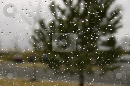 Rain Drops on the Windshield stock photo, Rain on the Windshield with the Green Tree on the Background by Mehmet Dilsiz