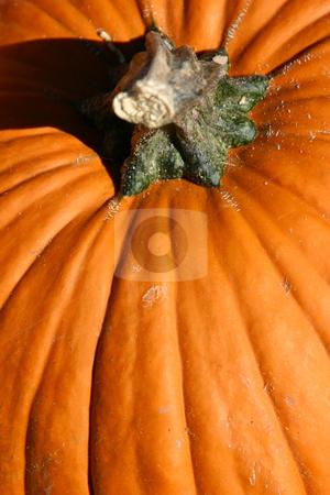 Up Close - Pumpkin stock photo, Close up on a Pumpkin with Stem by Mehmet Dilsiz