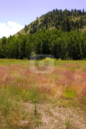 Country View in Helena Montana  stock photo, Meadows and Country View in Helena Montana - Vertical by Mehmet Dilsiz