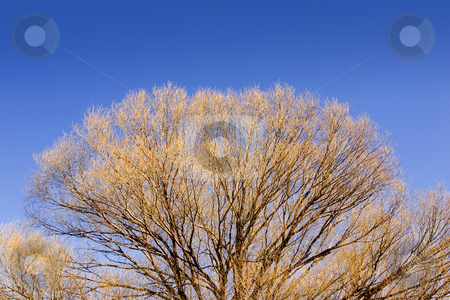 Close up on a Tree in the Spring stock photo, Close up on Tree Branches in Spring by Mehmet Dilsiz