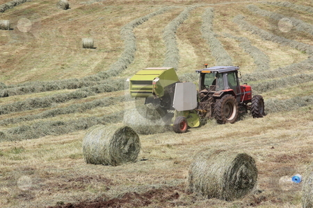 Baler Releasing Hay Bale stock photo, A baler releases a round hay bale during harvesting of winter fodder with two additional bales in the foreground. by Gozzoli