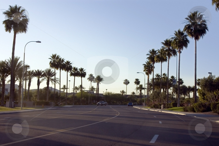 Palm Trees Along the Road of a Strip Mall stock photo, Palm Trees Along the Road of a Strip Mall with Blue Skies by Mehmet Dilsiz