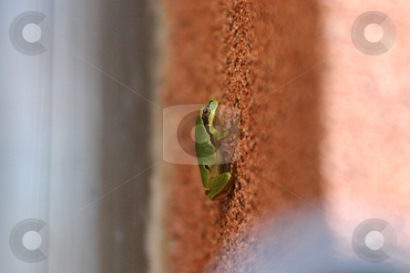 Frog going up on the wall stock photo, Close Up - Frog going up on the wall by Mehmet Dilsiz