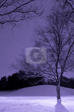 Light Post behind the Tree, Winter Scene stock photo, Vertical Shot of Light Post behind the Tree, Winter Scene by Mehmet Dilsiz