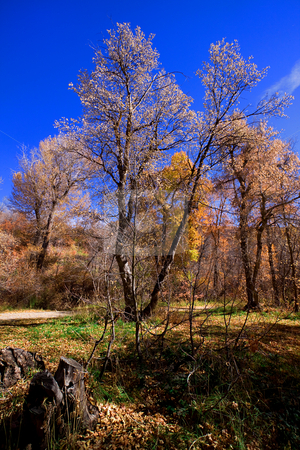 Trees under the Blue Skies stock photo, Trees under the Blue Skies in Autumn by Mehmet Dilsiz