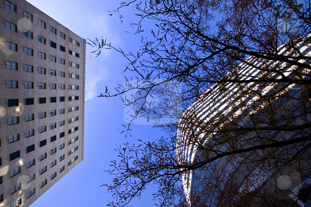 Looking Up to the Sky in Downtown stock photo, Looking up to the sky through trees and business buildings by Mehmet Dilsiz