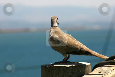 Bird Looking Down stock photo, Bird Looking down on an electric Post by Mehmet Dilsiz