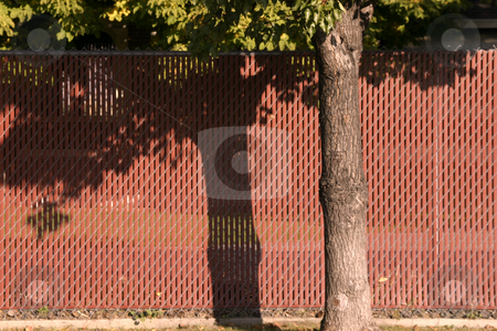 Red Fence behind a Tree stock photo, Close up on a Red Fence behind a Tree by Mehmet Dilsiz