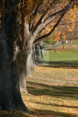 Tree and a Park stock photo, Tree and a Park by the Golf Course by Mehmet Dilsiz