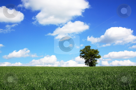 Spring Grass stock photo, A lush field of green spring grass with a lone tree against a graduated blue sky with scattered white clouds. by Gozzoli