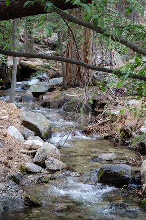 Forest creek stock photo,  by Brett Horne