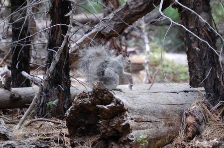 Squirrel on log stock photo,  by Brett Horne
