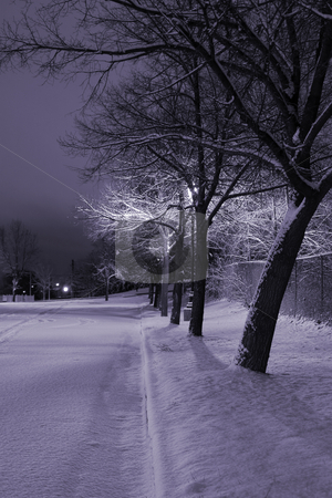 Snowy Trees in a Row in the Park- Winter Theme stock photo, Snowy Trees in a Row in the Park by Mehmet Dilsiz