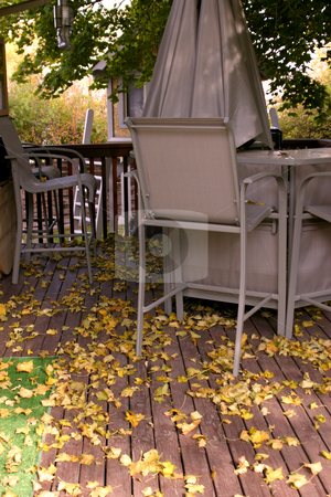 Fall in the Backyard stock photo, Leaves and the Fall in the Backyard by Mehmet Dilsiz
