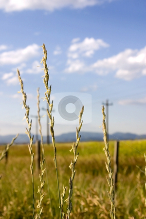 Field in Helena with Focus on the Weeds (DOF) stock photo, Field in Helena Montana with Focus on the Weeds close by and Blue Skies on the Background by Mehmet Dilsiz
