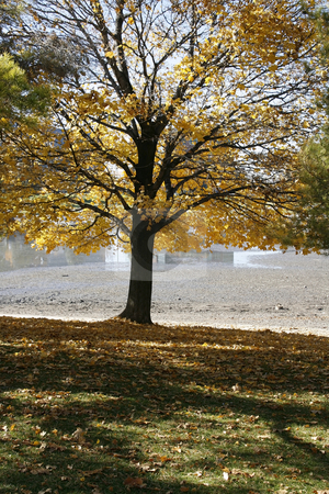 Close up on a Tree in the Fall stock photo, Close up on Tree Branches in Fall by Mehmet Dilsiz
