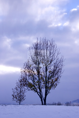 Trees under the Clouds stock photo, Trees under the Clouds in Winter by Mehmet Dilsiz