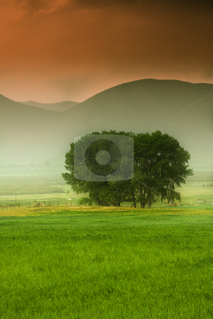 Tree behind a farm stock photo, A Tree behind a farm in rural Utah by Mehmet Dilsiz