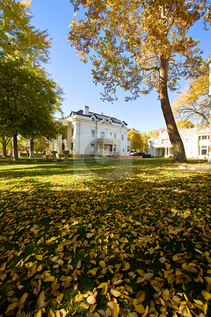 Leaves in the yard of a House stock photo, Autum Scene with leaves in the ground of a House by Mehmet Dilsiz