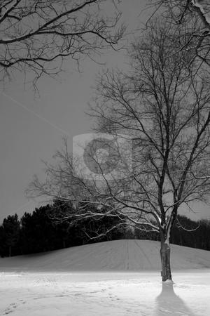 Light Post behind the Tree, Winter Scene - Black & White stock photo, B&W - Vertical Shot of Light Post behind the Tree, Winter Scene by Mehmet Dilsiz