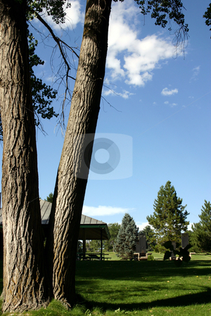 Park and the Tree stock photo, Tree in a Park with Reflection by Mehmet Dilsiz