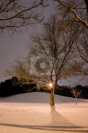 Light Post, Snowy Hill, Trees and it is Winter Time stock photo, Vertical Shot of Trees with the hill on the back in Winter Time by Mehmet Dilsiz