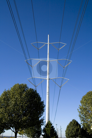 Power Lines over the Trees stock photo, Power Lines over the Trees with blue skies as background by Mehmet Dilsiz