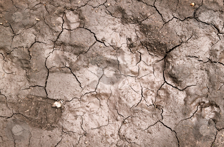 Wet mud cracks in a dried up river bed. stock photo, Wet mud cracks in a dried up river bed. by Stephen Rees