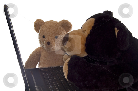 Teddy bears and computer stock photo, Two teddy bears working at a laptop, isolated on white. by Jeff Carson