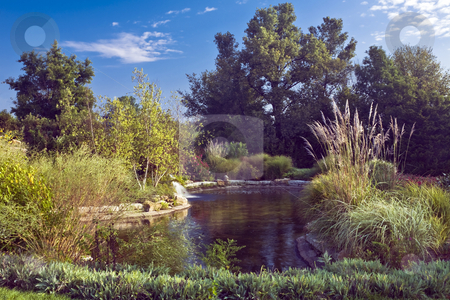 Arboretum pond stock photo, Pond surrounded by a lush variety of plants and trees by Bart Everett