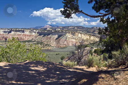 Escalante Bluffs stock photo, Rare desert tree offers a patch of shade overlooking bluffs in Grand Staircase-Escalante National Monument, Utah by Bart Everett