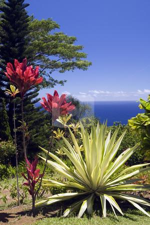 Arboretum and Botanical Garden Overlooking the Pacific Ocean stock photo, Arboretum and botanical garden on the Hana Highway, Maui, Hawaiim overlooking the Pacific Ocean by Bart Everett