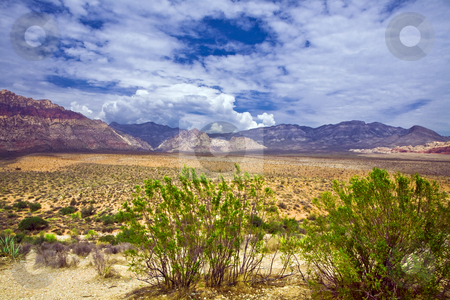 Broken Clouds Over Red Rock Canyon Mesquite stock photo, Mesquite frames an expanse of Red Rock Canyon National Conservation Area under beautiful broken clouds by Bart Everett