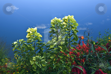 Leafy Garden stock photo, Red, yellow and green garden against wispy clouds by Bart Everett