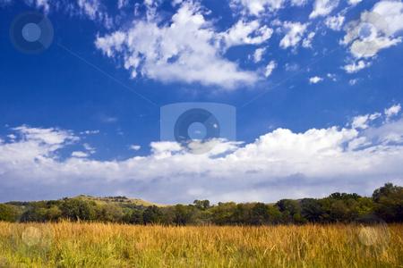 Kansas Grassland stock photo, Tall grass goes to seed in a Kansas farm pasture under a beautiful sky. by Bart Everett