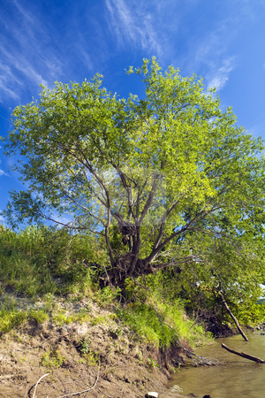 River Tree stock photo, A tree clings to the bank of the Kansas River under a cloud-streaked sky. by Bart Everett