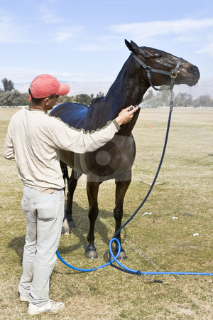 Horse Shower stock photo, Groom cools off horse after polo chukker by Bart Everett