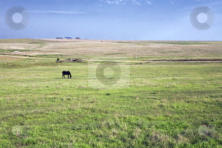 Kansas Horse Pasture stock photo, A lone horse grazes in a pasture near a barn and ranch house on the rolling Kansas plains by Bart Everett