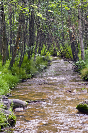 Alaska Stream stock photo, Small stream meanders through lush foliage and trees by Bart Everett