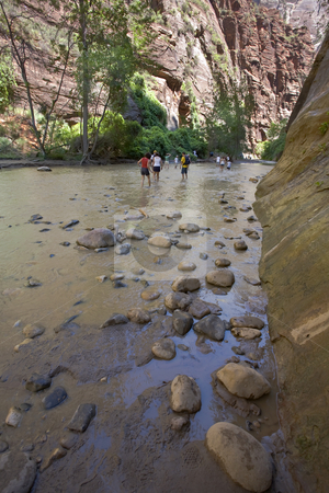 Wading Up the Virgin River stock photo, Day hikers wade up the Virgin River in Zion National Park by Bart Everett