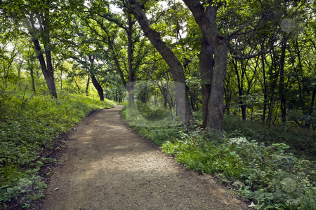 Forest Trail stock photo, Nature trail winds through the Konza Prairie Preserve in the Flint Hills of Kansas by Bart Everett