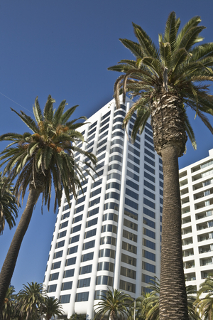 Office Building Palms stock photo, Modern office buildings rise among palm trees in California by Bart Everett