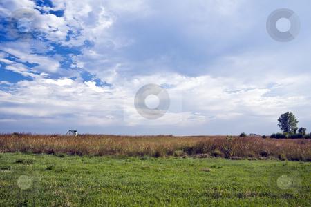 Prairie Farmhouse stock photo, Kansas farmhouse surrounded by tall grasses under a cloud-streaked sky by Bart Everett