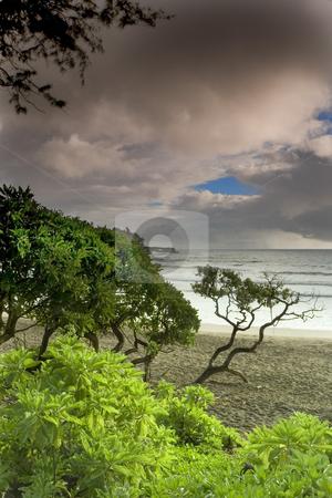 Stormy Hana Beach stock photo, Rain clouds at dawn provide a colorful backdrop over a beach in Hana, Hawaii, on the island of Maui by Bart Everett