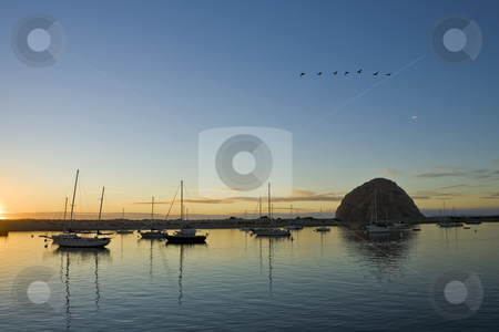 Geese Over Morro Bay Harbor stock photo, A flock of geese flies south over Moro Bay harbor in California at sunset by Bart Everett