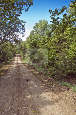 Kansas Wilderness Road stock photo, Tree-lined dirt road cuts through Clinton Wilderness Area near Lawrence, Kansas by Bart Everett